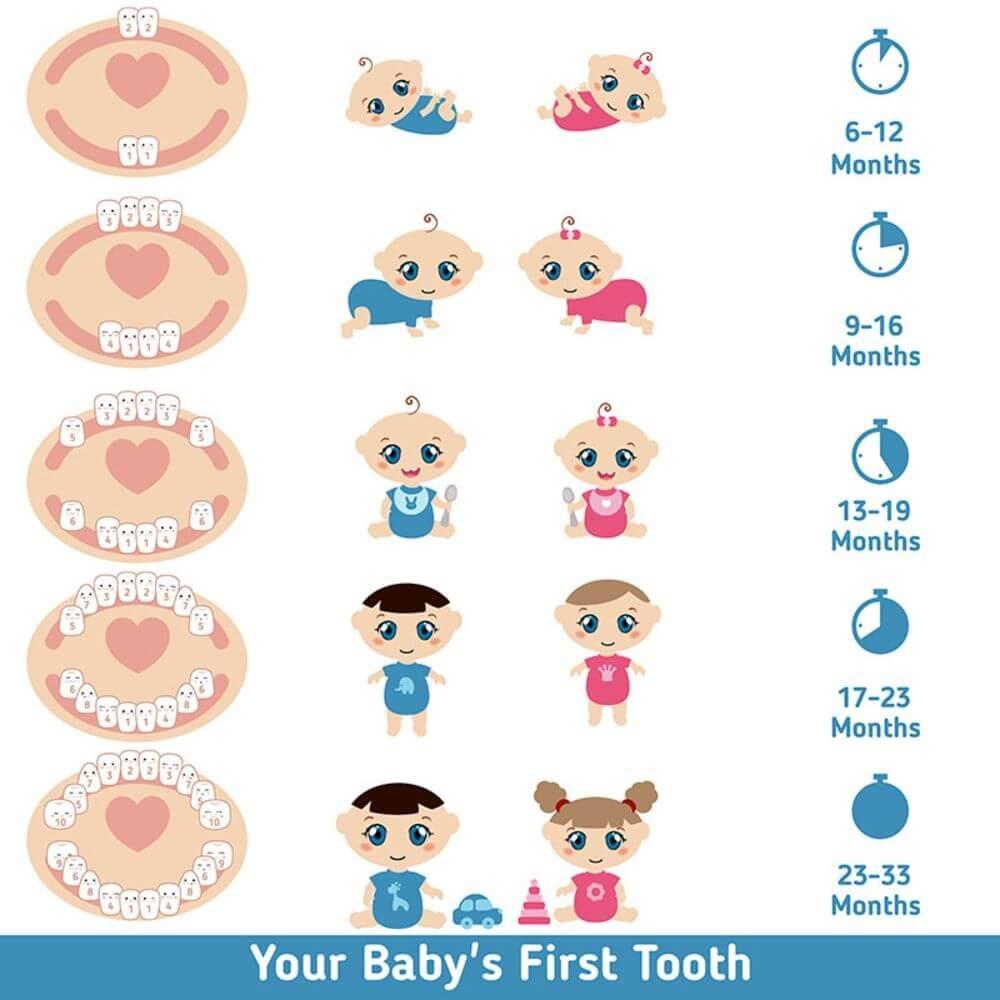 Dentitia bebelusului - aparitia primilor dinti
